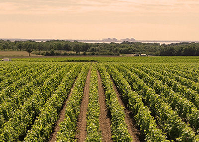 Sociando Mallet - Les vignobles 2/3